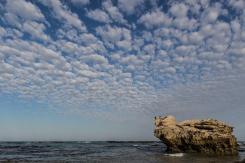 de hoop nature park aalscholvers cormorants